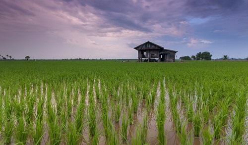 Pangan dan Pertanian Jadi Andalan Jabar di Masa Depan