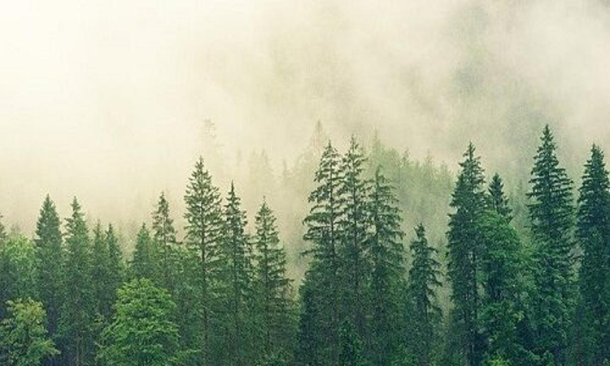 Hutan : Pengertian, Definisi, Jenis, dan Manfaat