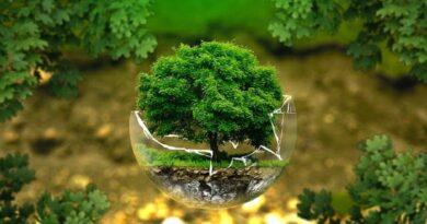 Pengertian Lingkungan, Jenis, Hingga Cara Melestarikannya