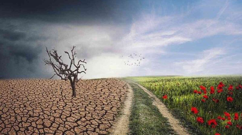 5 Manfaat Tumbuhan Bagi Manusia dan Hewan di Bumi